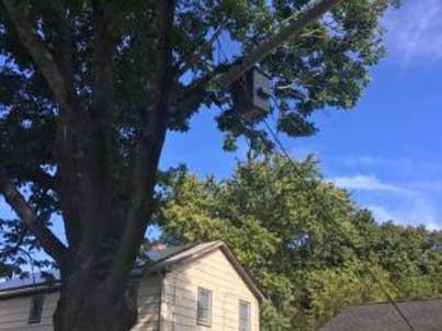 Tree-Pruning