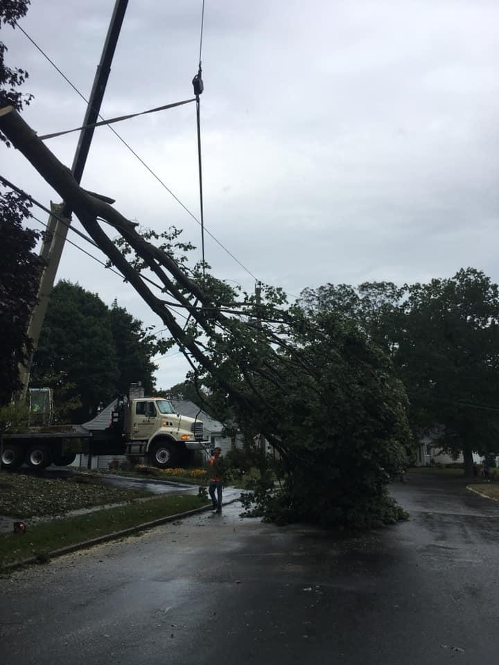 Crane Tree Service